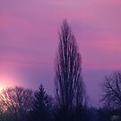 purple morning by Bibi03