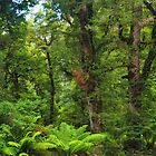 Beech Forest by Bette Devine