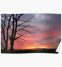 Wall Wood Sunset Poster