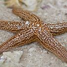 Starfish by Karen  Moore