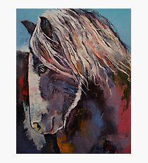 Highland Pony Photographic Print