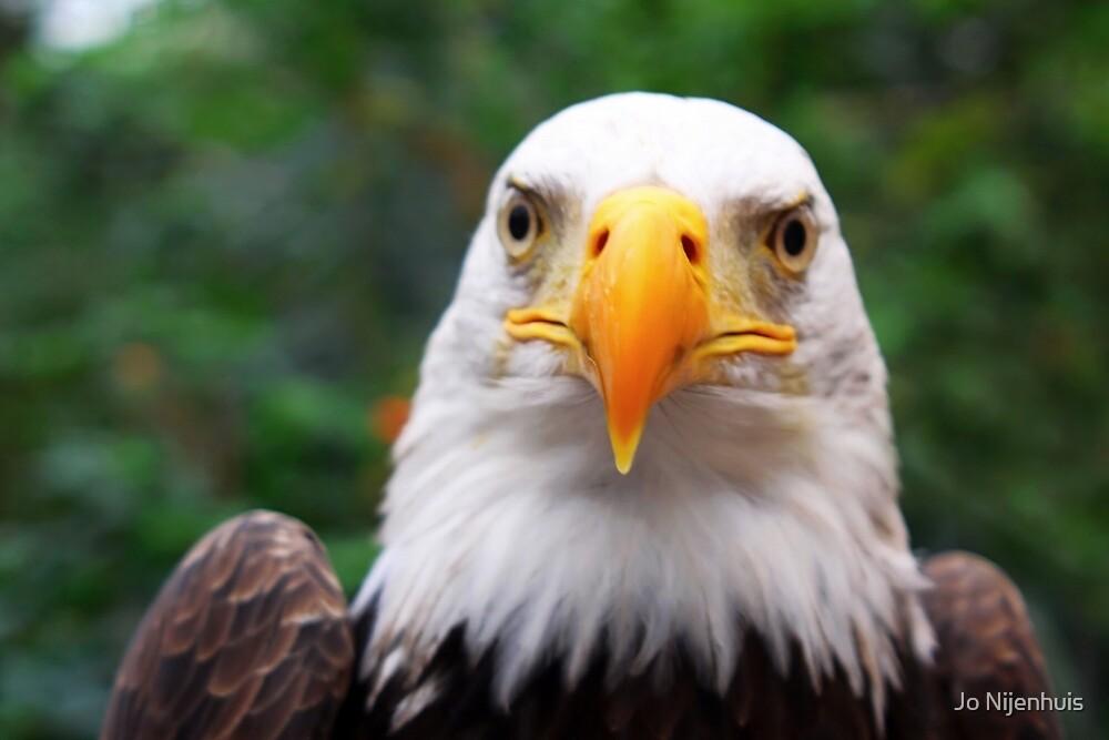 Eye to Eye with A Bald Eagle by Jo Nijenhuis