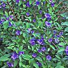 blue flowers by Albert