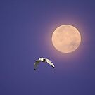 Moonlight Flight by BigD