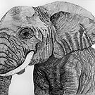 Elephant portrait by bnispel22