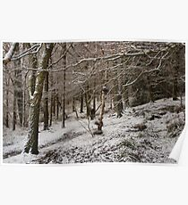 Snow Covered Woodland Poster