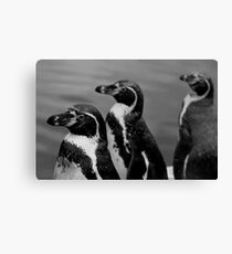 P...P...P...Penguin Canvas Print