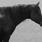 The Lone Stallion by Lover1969