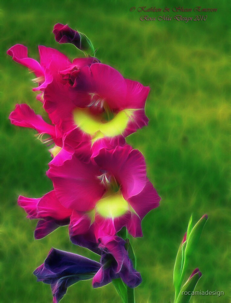 Pink Glads by rocamiadesign