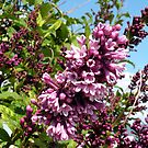 Pink Lilacs by rocamiadesign