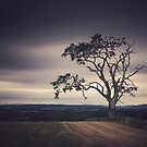 Tree, Muthill by ShinyPhoto