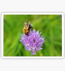 Bee & Chives Sticker