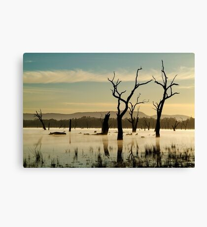 Dead Wood in the Morning Mist,Lake Fyans, Grampians Canvas Print