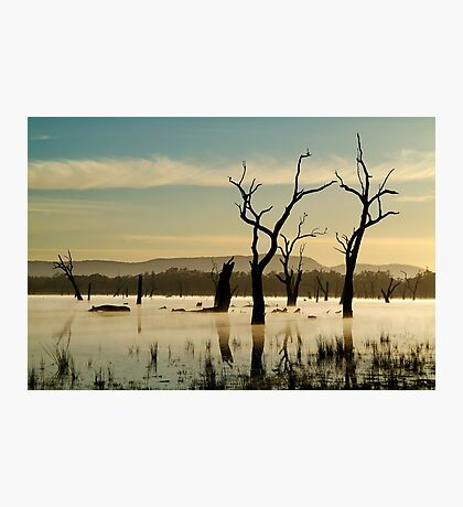 Dead Wood in the Morning Mist,Lake Fyans, Grampians Photographic Print