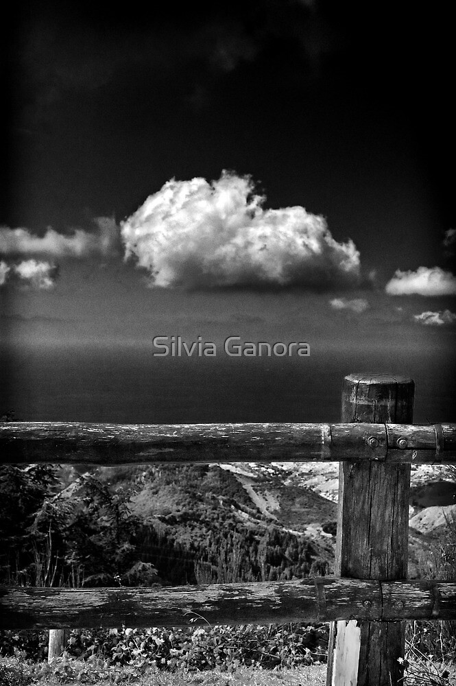 The fence by Silvia Ganora