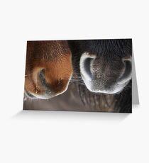 Shetland Pony Noses Greeting Card