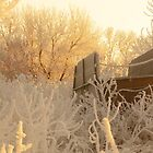 Wagon in the frost by Troy Stapek