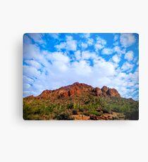 Tucson Mountain Park Arizona 2014 Metal Print