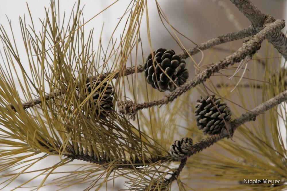 Winter Seeds by Nicole Meyer