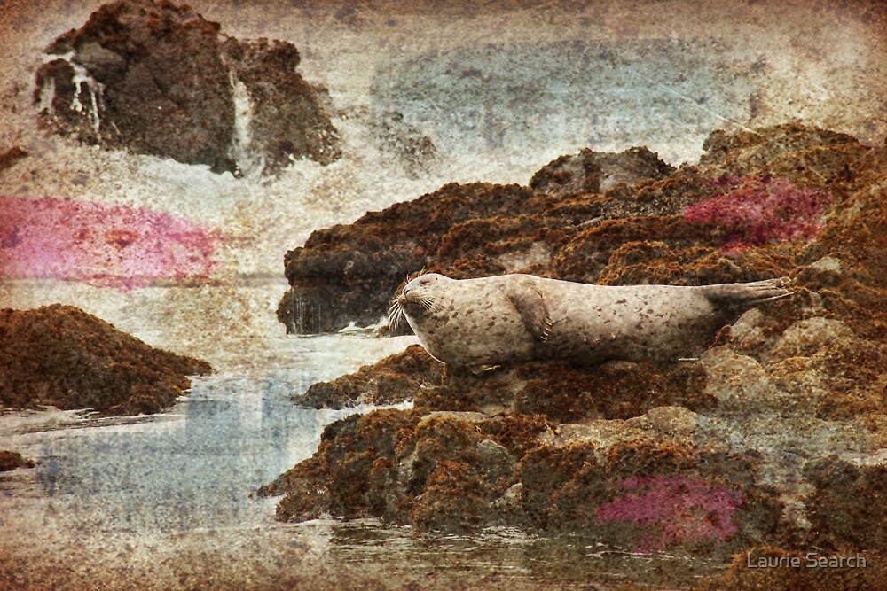 Comfortable by Laurie Search