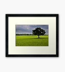 Single tree in the middle of fields Framed Print