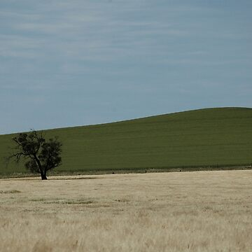 Tree And Hill, Barossa Valley, South Australia 2018 by muz2142