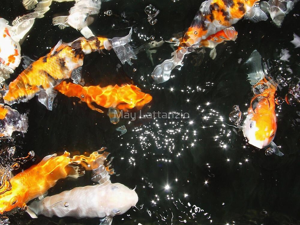 Koi and Stars by May Lattanzio