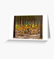 09-110 ~ young deer stand ready for flight Greeting Card