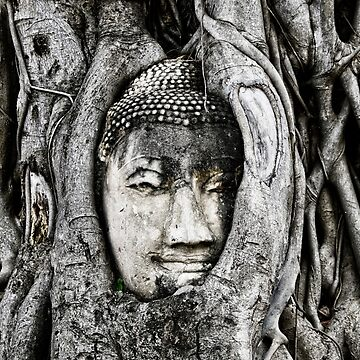Thai Buddha head entwined in Banyan tree roots by FlatLandPrints