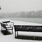 Take a seat by Dalmatinka