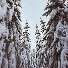 Snowy forest  by brabikate