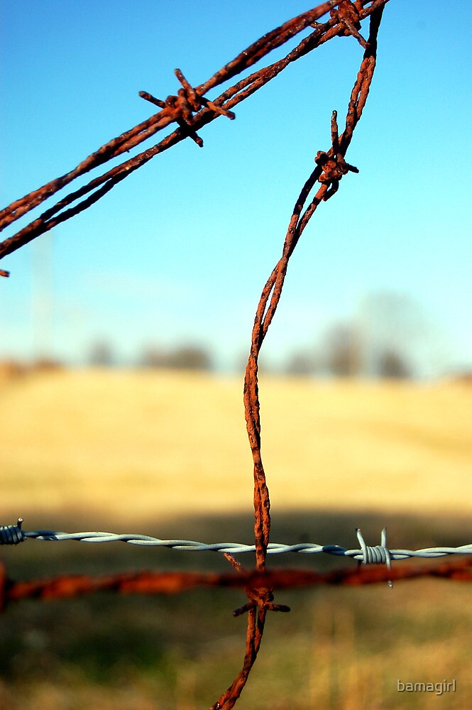 Barbed Wire by bamagirl