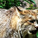 Minnesota Lynx by shutterbug2010