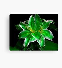 St. Paddy's Day Lily Canvas Print