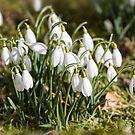 Spring Is Coming by Lynne Morris