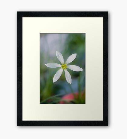 Rain Lilly - Jacques coffee plantation Mareeba  Framed Print