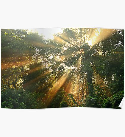 Morning Light In The Forest Poster
