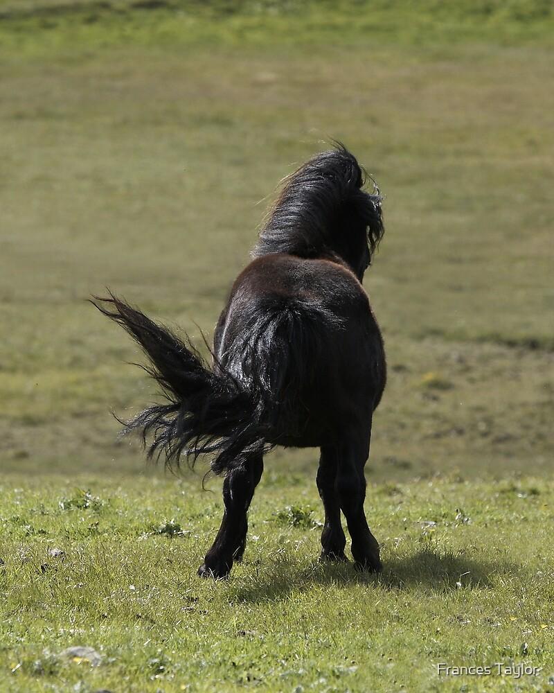 Stallion by Frances Taylor