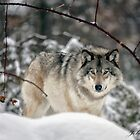 ...someone is watching you ... by John44