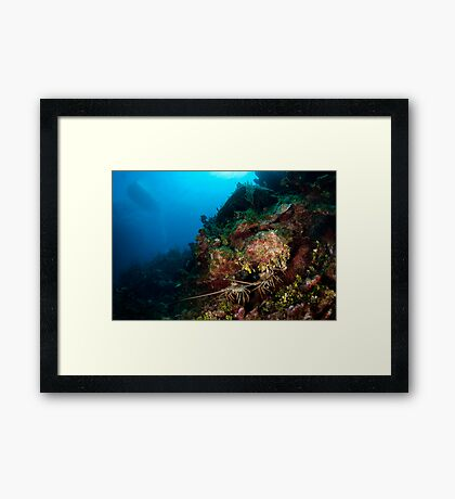 Lobsters den Framed Print