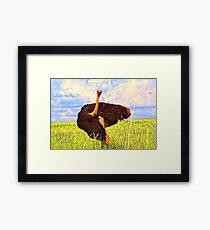"""""""Contentment- Ostrich in  Gauteng, South Africa"""" Framed Print"""