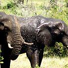 Elephants Baithing - WildAfrika by WildAfrika
