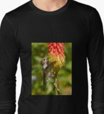 Rufous Hummingbird on Red Hot Poker T-Shirt T-Shirt