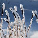 Snowflakes and hoarfrost  by Istvan Hernadi