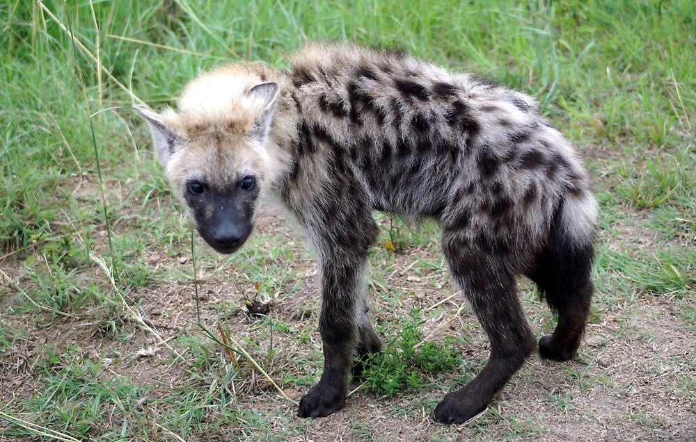 Hyena Young - Wild Afrika by WildAfrika