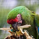 Polly? by HelenBeresford