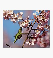 Sipping Nectar From a Floral Cup Photographic Print