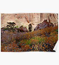 Kolob Canyon Fall Colors Poster