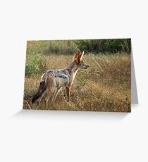 Jackal - WildAfrika Greeting Card