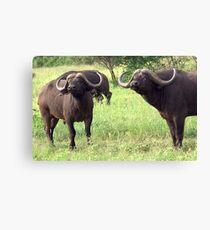 Cape Buffaloes - WildAfrika Canvas Print